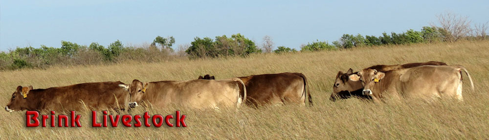 Brink Livestock